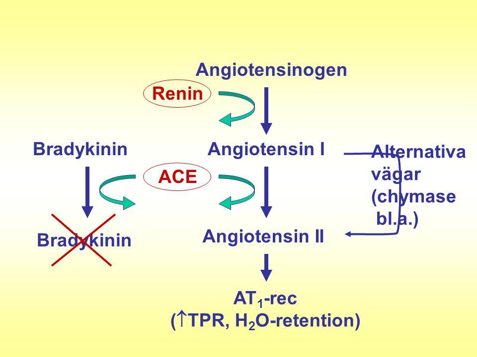 Angiotensinogen Renin Angiotensin I ACE Angiotensin II Alternativa vägar (chymase bl.a.) Bradykinin AT 1 -rec (  TPR, H 2 O-retention)