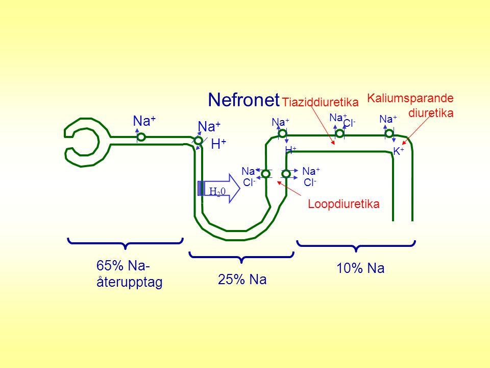 H20H20 Na + H+H+ H+H+ Cl - Na + K+K+ Cl - Na + Cl - Nefronet 65% Na- återupptag 25% Na 10% Na Loopdiuretika Tiaziddiuretika Kaliumsparande diuretika