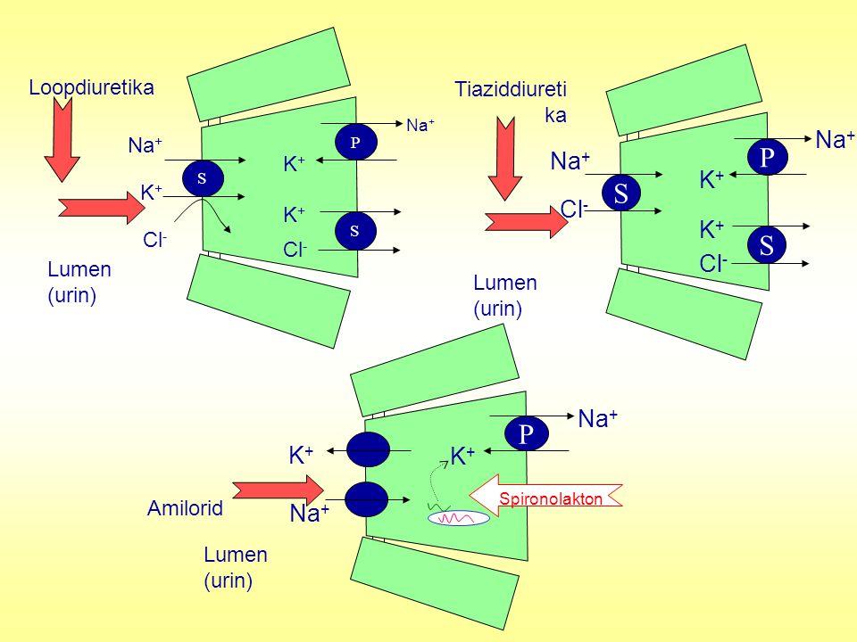 P S S Loopdiuretika Na + Cl - K+K+ Lumen (urin) Na + K+K+ K+K+ Cl - P S S Tiaziddiureti ka Na + Cl - Lumen (urin) Na + K+K+ K+K+ Cl - P Na + Lumen (ur