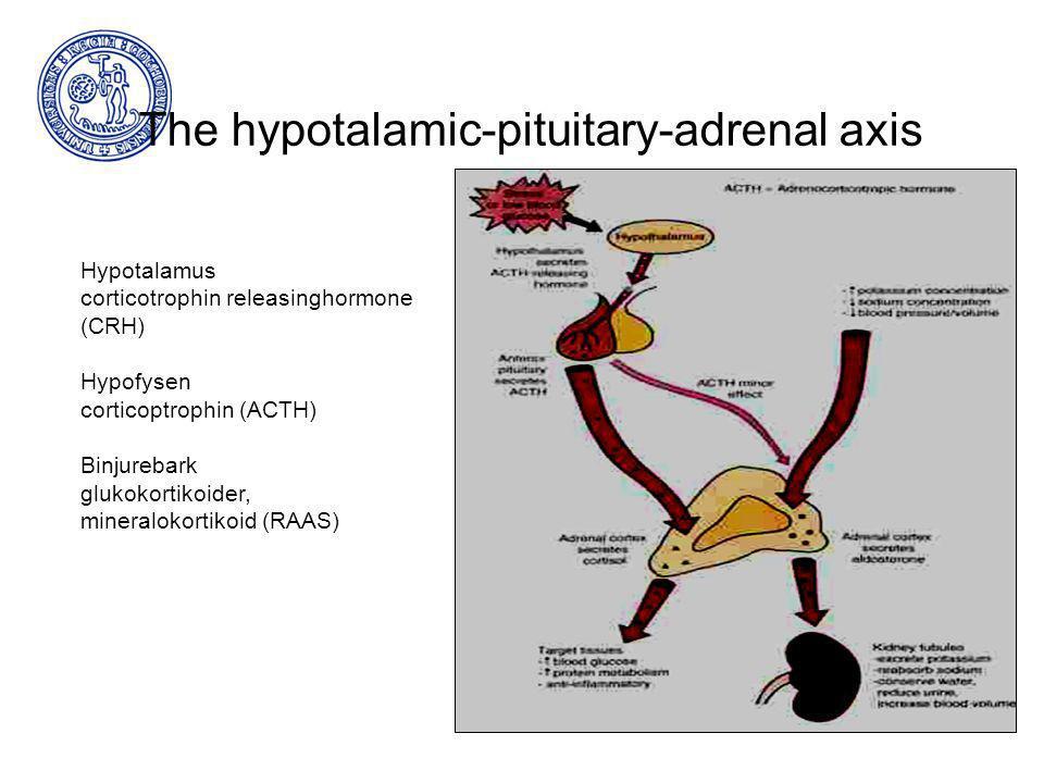 The hypotalamic-pituitary-adrenal axis Hypotalamus corticotrophin releasinghormone (CRH) Hypofysen corticoptrophin (ACTH) Binjurebark glukokortikoider