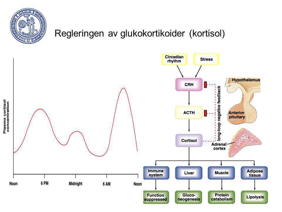 Regleringen av glukokortikoider (kortisol)