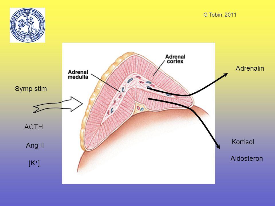 G Tobin, 2011 ACTH Symp stim Ang II [K + ] Adrenalin Kortisol Aldosteron