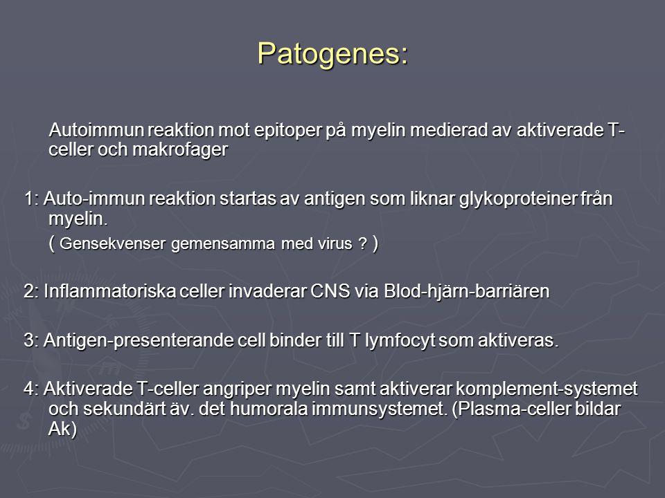 Patogenes: Autoimmun reaktion mot epitoper på myelin medierad av aktiverade T- celler och makrofager Autoimmun reaktion mot epitoper på myelin mediera