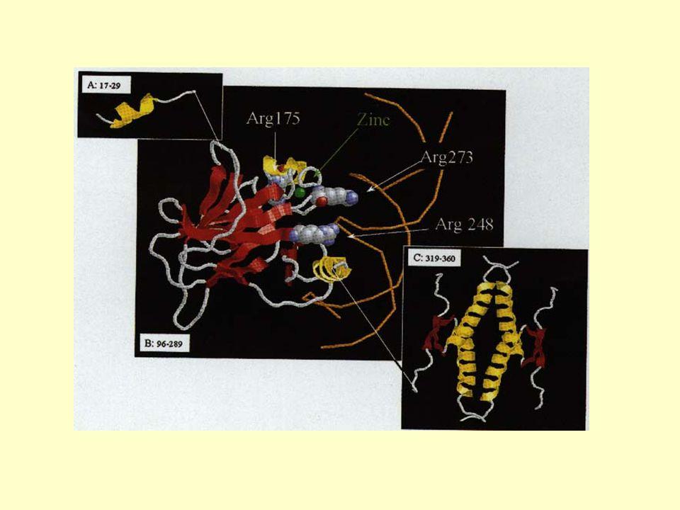 Modellorganismer för vilka totala genomet är känt eller kommer snart att bli känt Drosophila 2000 (mars) 50%av 7000 proteiner lika som hos människan och 60% av 289 kända sjukdomsframkallande gener hos människa lika Yeast (S.