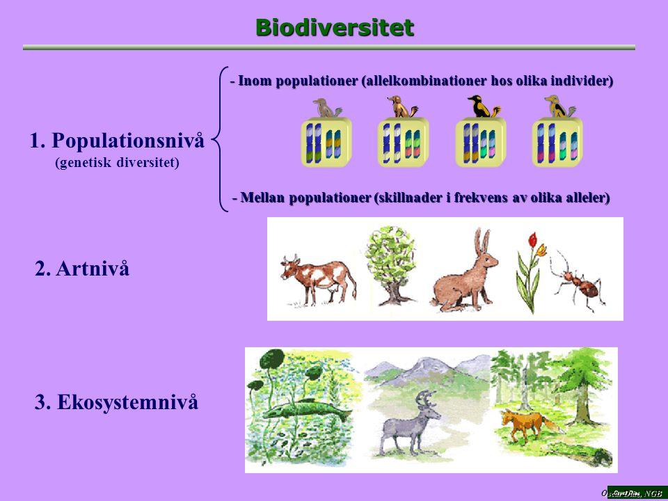 Oscar Díaz Biodiversitet 2.Artnivå 3. Ekosystemnivå 1.