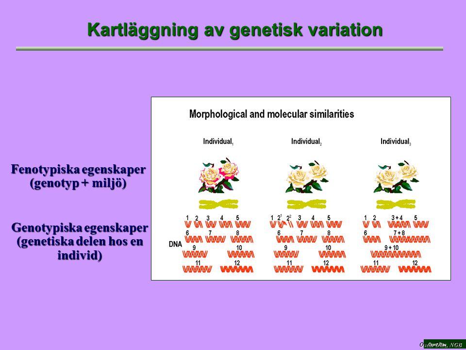 Oscar Díaz Kartläggning av genetisk variation Fenotypiska egenskaper (genotyp + miljö) Genotypiska egenskaper (genetiska delen hos en individ) Oscar Diaz, NGB