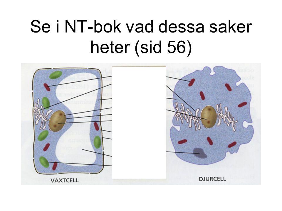 Cellkärna Kärnan innehåller cellens arvsanlag.I cellkärnan finns det 46 kromosomer.