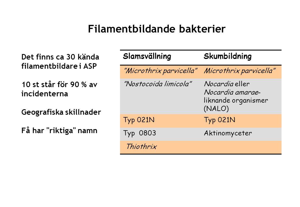 Filamentbildande bakterier SlamsvällningSkumbildning Microthrix parvicella Microthrix parvicella Nostocoida limicola Nocardia eller Nocardia amarae- liknande organismer (NALO) Typ 021N Typ 0803Aktinomyceter Thiothrix Det finns ca 30 kända filamentbildare i ASP 10 st står för 90 % av incidenterna Geografiska skillnader Få har riktiga namn