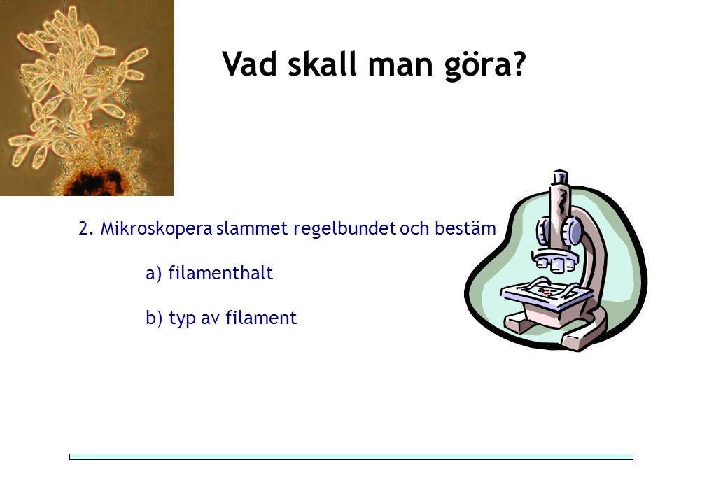 Vad skall man göra? 2. Mikroskopera slammet regelbundet och bestäm a) filamenthalt b) typ av filament