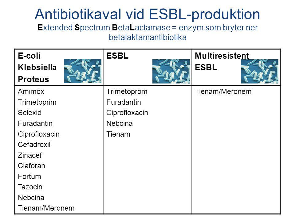 E-coli Klebsiella Proteus ESBLMultiresistent ESBL Amimox Trimetoprim Selexid Furadantin Ciprofloxacin Cefadroxil Zinacef Claforan Fortum Tazocin Nebcina Tienam/Meronem Trimetoprom Furadantin Ciprofloxacin Nebcina Tienam Tienam/Meronem Antibiotikaval vid ESBL-produktion Extended Spectrum BetaLactamase = enzym som bryter ner betalaktamantibiotika