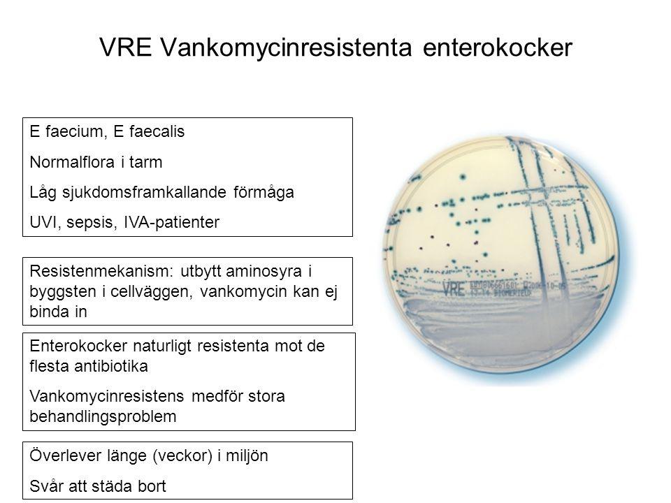 E faecium, E faecalis Normalflora i tarm Låg sjukdomsframkallande förmåga UVI, sepsis, IVA-patienter Enterokocker naturligt resistenta mot de flesta antibiotika Vankomycinresistens medför stora behandlingsproblem Resistenmekanism: utbytt aminosyra i byggsten i cellväggen, vankomycin kan ej binda in Överlever länge (veckor) i miljön Svår att städa bort VRE Vankomycinresistenta enterokocker