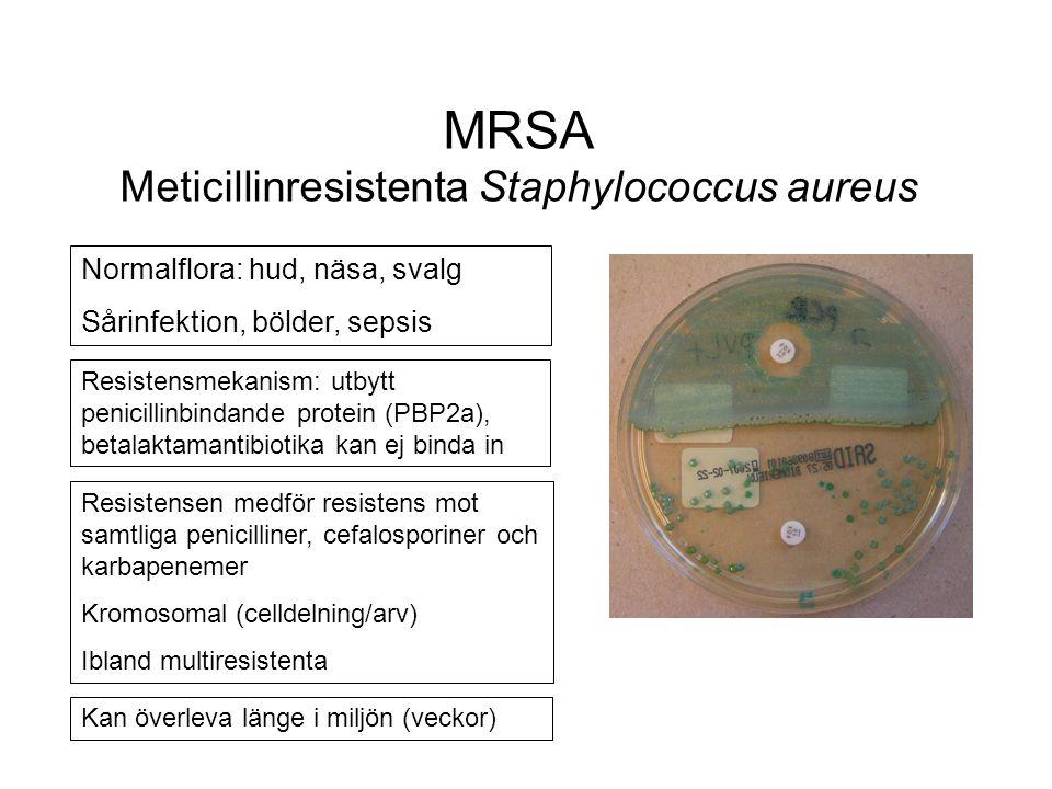 MRSA Meticillinresistenta Staphylococcus aureus Normalflora: hud, näsa, svalg Sårinfektion, bölder, sepsis Resistensen medför resistens mot samtliga penicilliner, cefalosporiner och karbapenemer Kromosomal (celldelning/arv) Ibland multiresistenta Resistensmekanism: utbytt penicillinbindande protein (PBP2a), betalaktamantibiotika kan ej binda in Kan överleva länge i miljön (veckor)