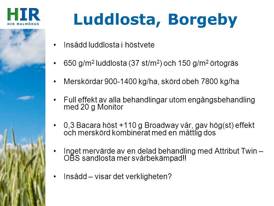 Luddlosta, Borgeby Insådd luddlosta i höstvete 650 g/m 2 luddlosta (37 st/m 2 ) och 150 g/m 2 örtogräs Merskördar 900-1400 kg/ha, skörd obeh 7800 kg/h