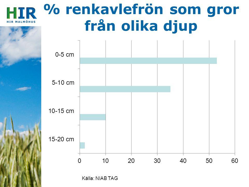 % renkavlefrön som gror från olika djup Källa: NIAB TAG