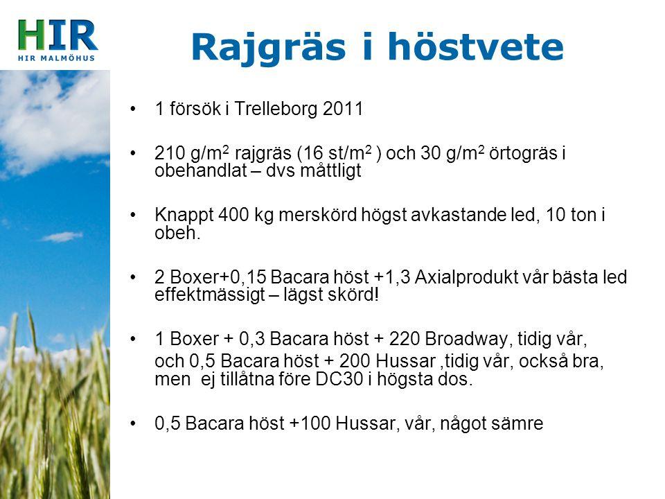 Rajgräs i höstvete 1 försök i Trelleborg 2011 210 g/m 2 rajgräs (16 st/m 2 ) och 30 g/m 2 örtogräs i obehandlat – dvs måttligt Knappt 400 kg merskörd