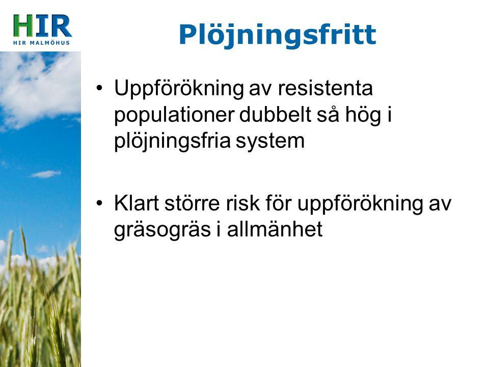 Plöjningsfritt Uppförökning av resistenta populationer dubbelt så hög i plöjningsfria system Klart större risk för uppförökning av gräsogräs i allmänh