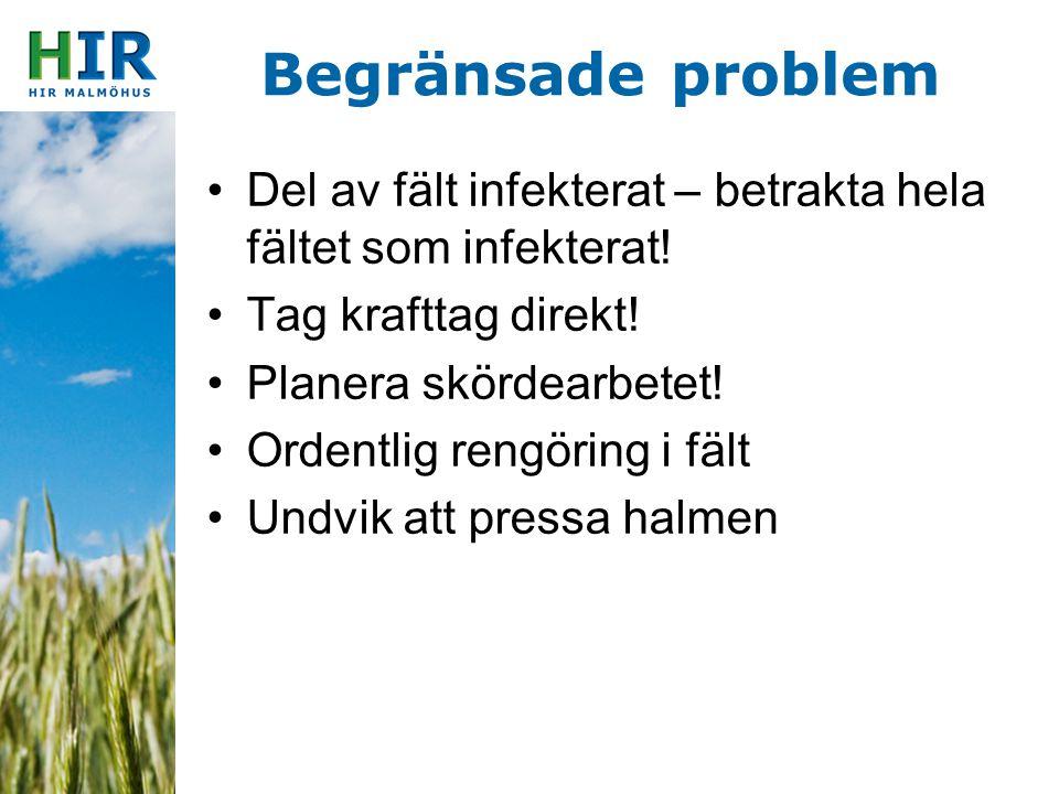 Begränsade problem Del av fält infekterat – betrakta hela fältet som infekterat! Tag krafttag direkt! Planera skördearbetet! Ordentlig rengöring i fäl