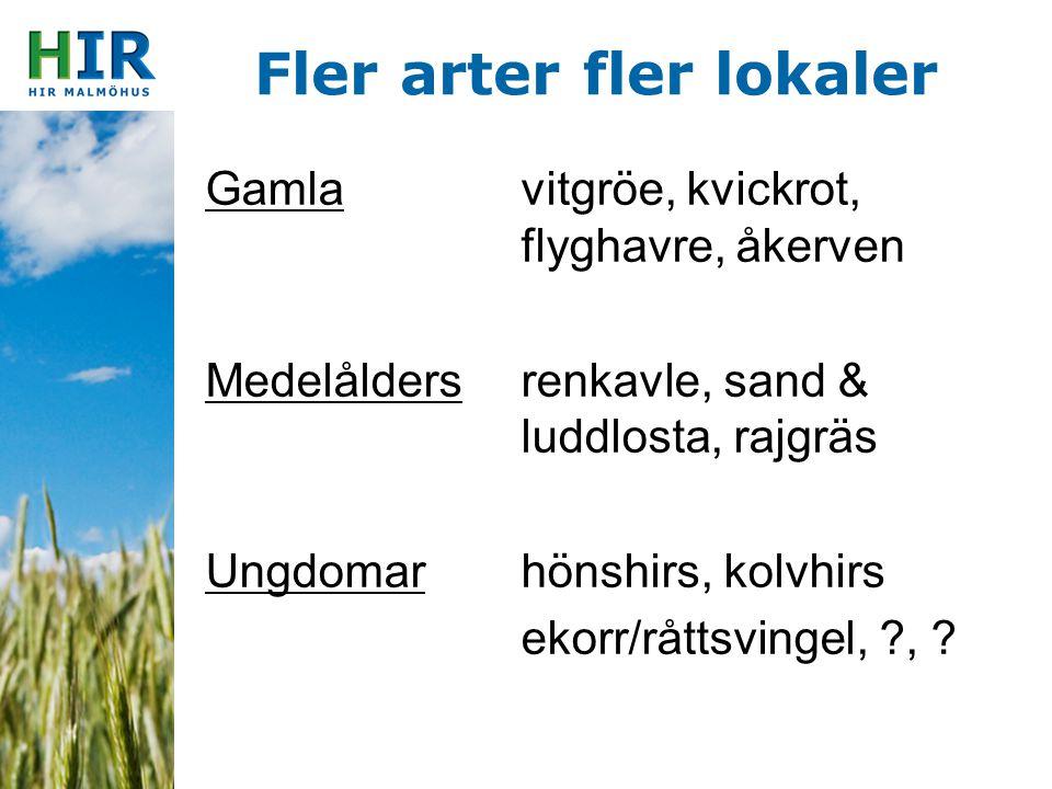 Fler arter fler lokaler Gamlavitgröe, kvickrot, flyghavre, åkerven Medelåldersrenkavle, sand & luddlosta, rajgräs Ungdomar hönshirs, kolvhirs ekorr/rå