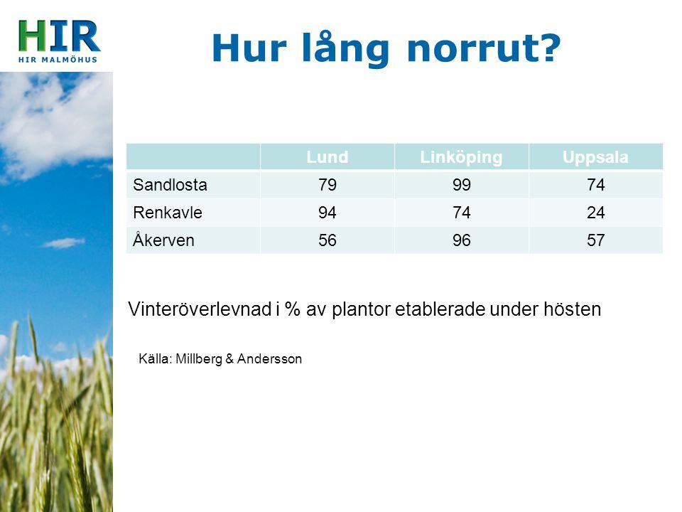 Hur lång norrut? LundLinköpingUppsala Sandlosta799974 Renkavle947424 Åkerven569657 Vinteröverlevnad i % av plantor etablerade under hösten Källa: Mill