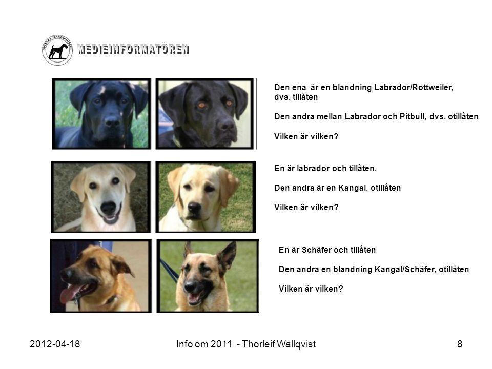 2012-04-18Info om 2011 - Thorleif Wallqvist8 Den ena är en blandning Labrador/Rottweiler, dvs. tillåten Den andra mellan Labrador och Pitbull, dvs. ot