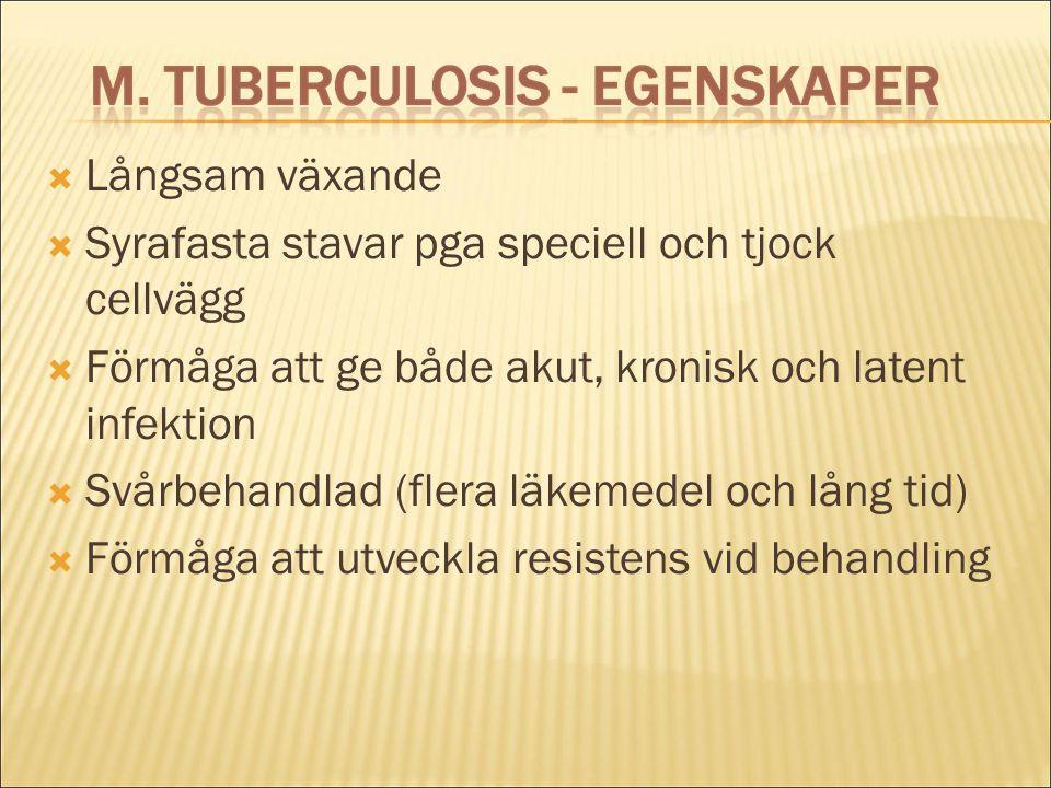  Långsam växande  Syrafasta stavar pga speciell och tjock cellvägg  Förmåga att ge både akut, kronisk och latent infektion  Svårbehandlad (flera l