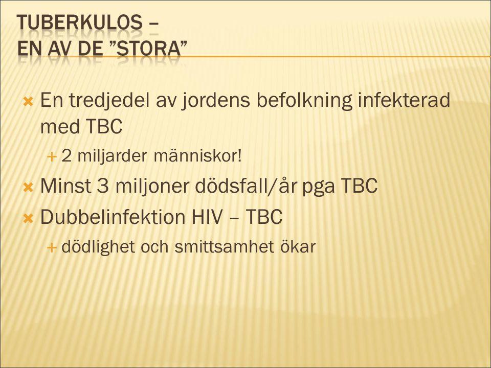  En tredjedel av jordens befolkning infekterad med TBC  2 miljarder människor!  Minst 3 miljoner dödsfall/år pga TBC  Dubbelinfektion HIV – TBC 