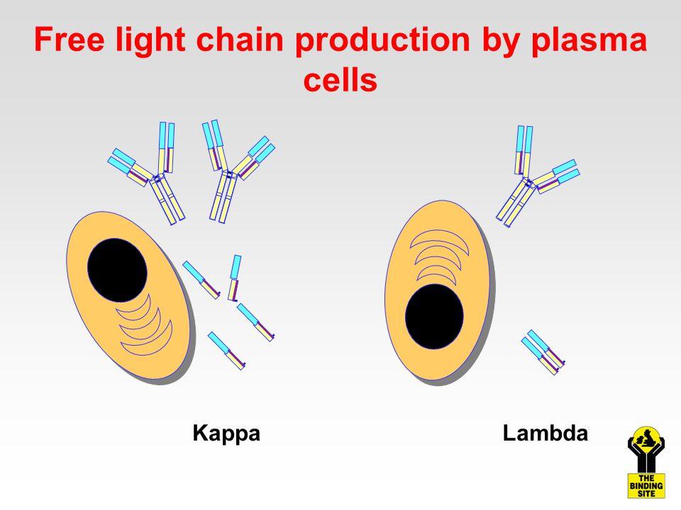 Free light chain production by plasma cells KappaLambda