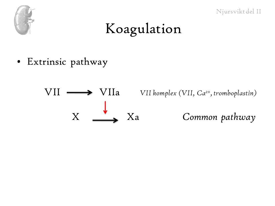 Njursvikt del II Koagulation Extrinsic pathway VIIVIIa VII komplex (VII, Ca 2+, tromboplastin) XXa Common pathway