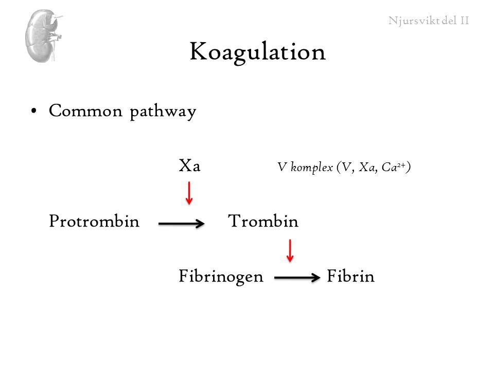 Njursvikt del II Koagulation Common pathway Xa V komplex (V, Xa, Ca 2+ ) ProtrombinTrombin FibrinogenFibrin