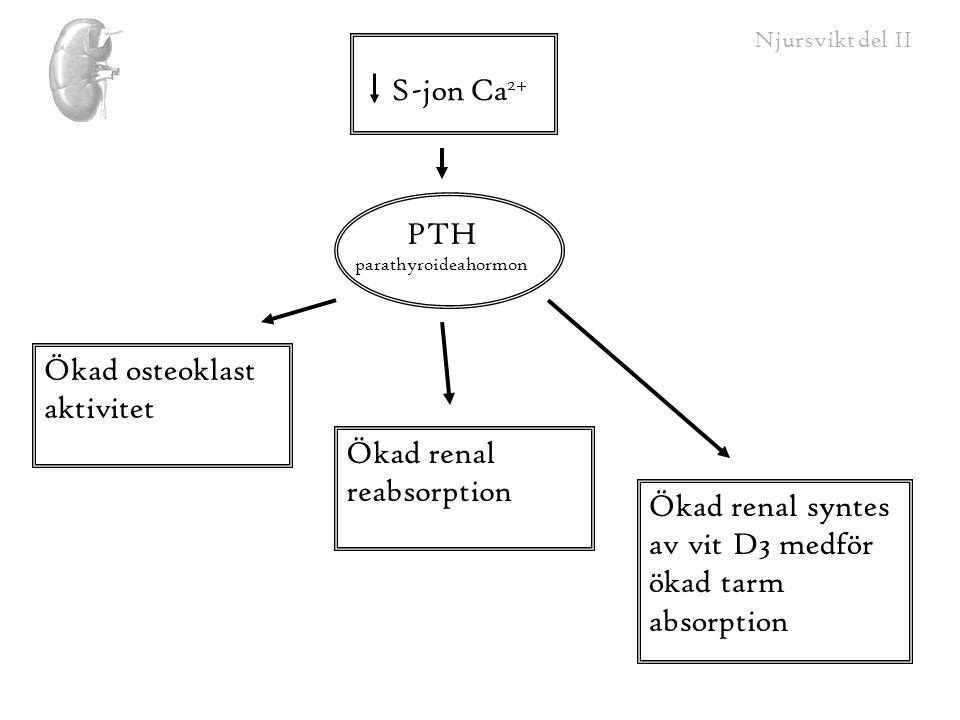 Njursvikt del II S-jon Ca 2+ Ökad osteoklast aktivitet Ökad renal reabsorption Ökad renal syntes av vit D3 medför ökad tarm absorption PTH parathyroid