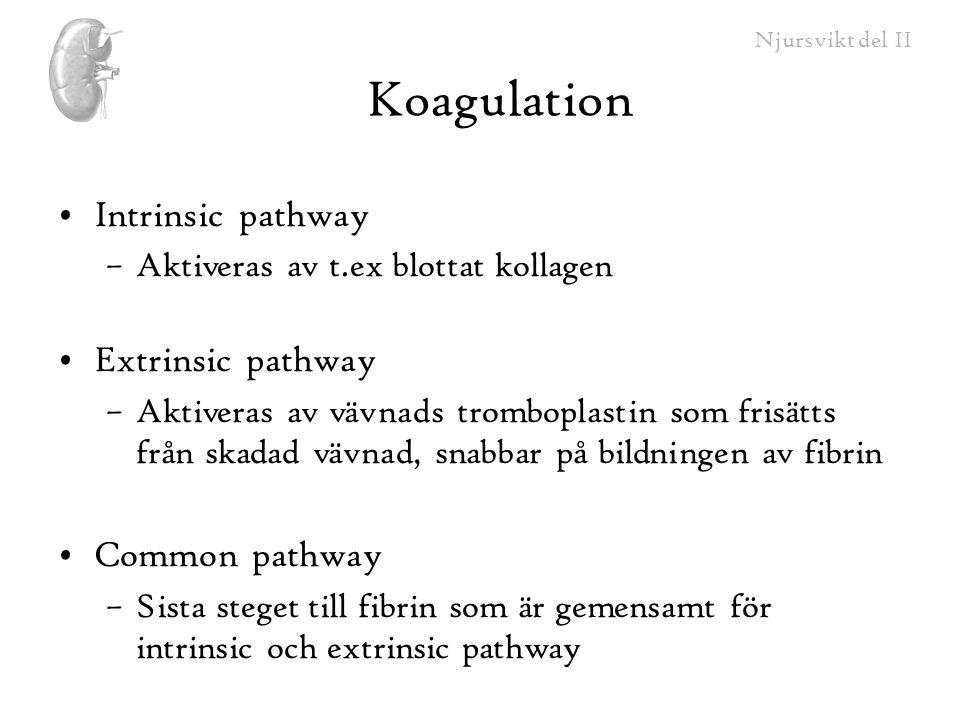 Njursvikt del II Koagulation Intrinsic pathway –Aktiveras av t.ex blottat kollagen Extrinsic pathway –Aktiveras av vävnads tromboplastin som frisätts