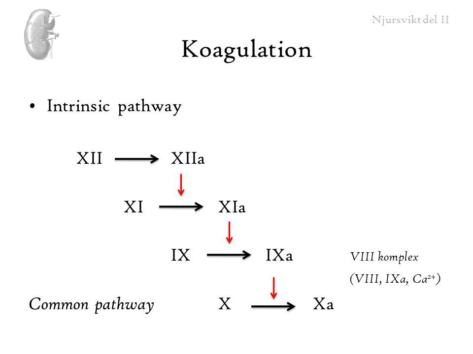Njursvikt del II Koagulation Intrinsic pathway XIIXIIa XIXIa IXIXa VIII komplex (VIII, IXa, Ca 2+ ) Common pathway XXa