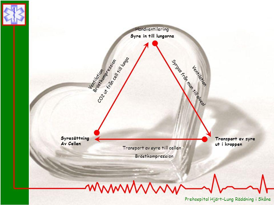 Syre in till lungorna Syrgas från mun till alveol CO2 ut från cell till lunga Transport av syre ut i kroppen Transport av syre till cellen Syresättning Av Cellen Bröstkompression Handventilering Ventilation Bröstkompression Ventilation