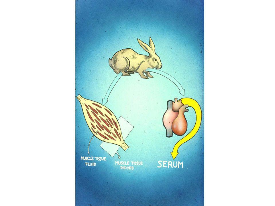 T>MIC för Kåvepenin vid olika doseringar 1g ger Cmax =10 mg/l, proteinbindning=80%, dvs 2mg/l fritt.