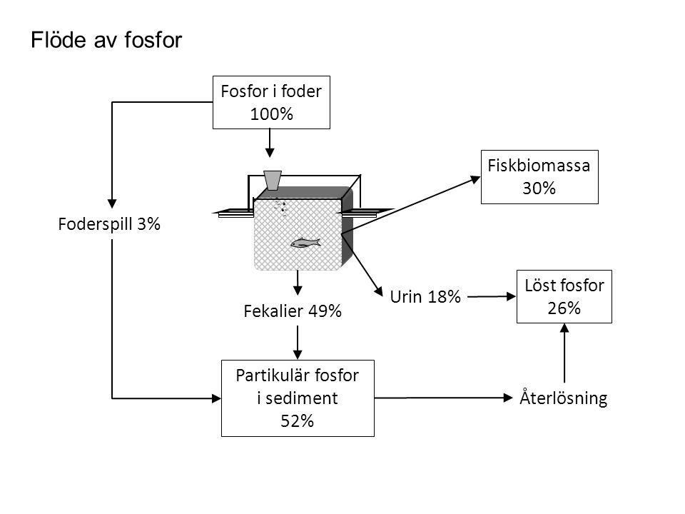Fosfor i foder 100% Flöde av fosfor Partikulär fosfor i sediment 52% Foderspill 3% Återlösning Löst fosfor 26% Fiskbiomassa 30% Fekalier 49% Urin 18%
