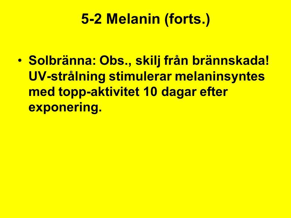 5-2 Melanin (forts.) Solbränna: Obs., skilj från brännskada! UV-strålning stimulerar melaninsyntes med topp-aktivitet 10 dagar efter exponering.