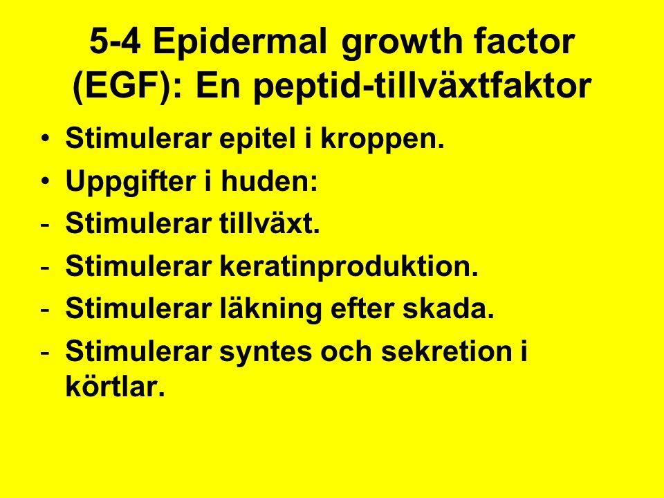 5-4 Epidermal growth factor (EGF): En peptid-tillväxtfaktor Stimulerar epitel i kroppen. Uppgifter i huden: -Stimulerar tillväxt. -Stimulerar keratinp