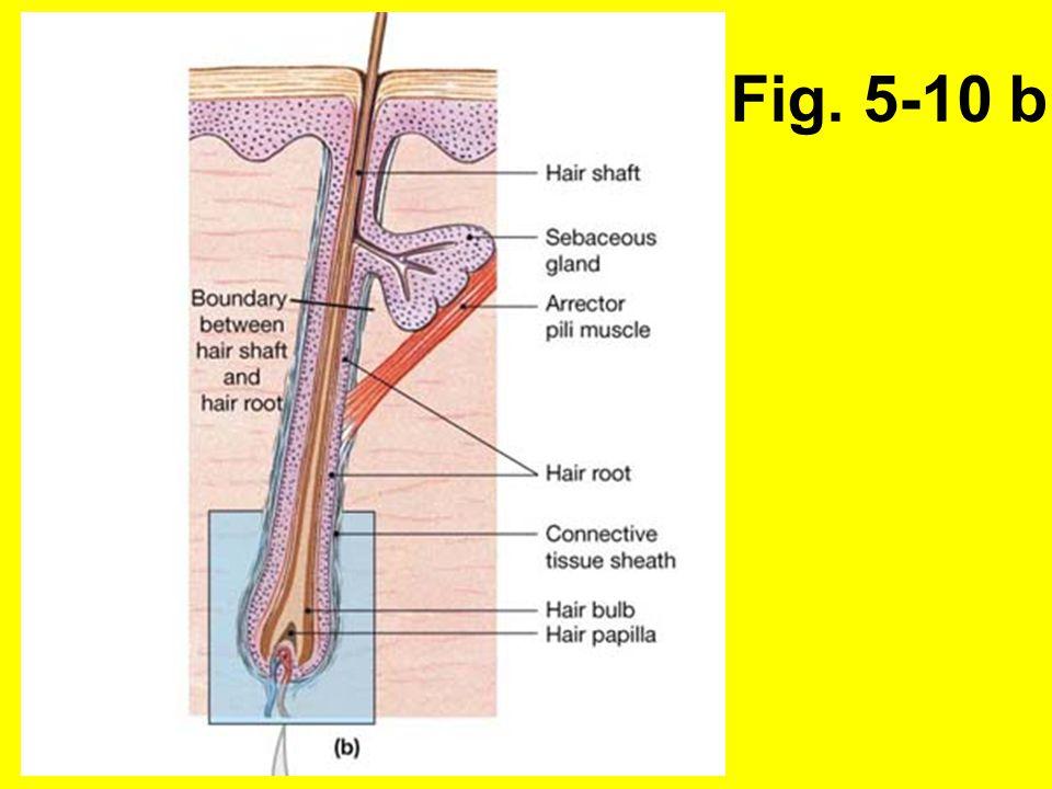 Fig. 5-10 b