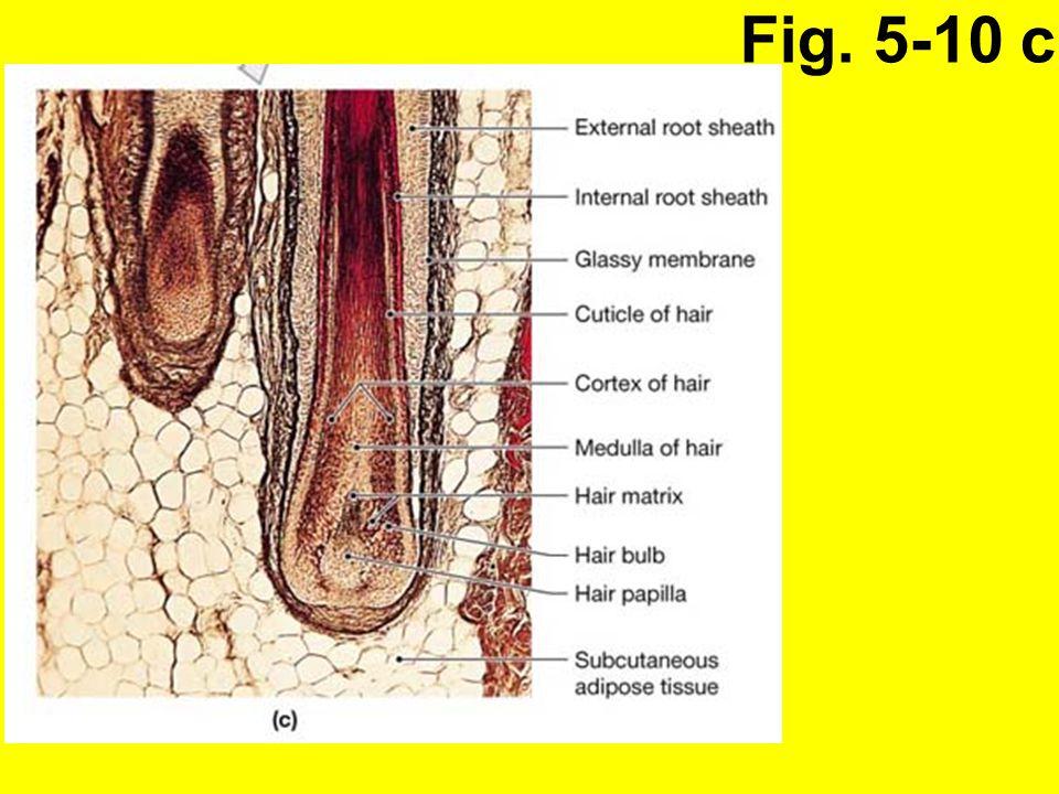 Fig. 5-10 c