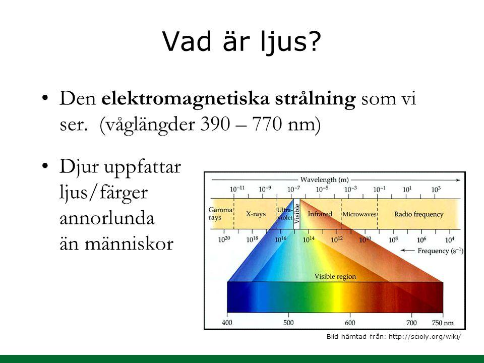 Vad är ljus? Den elektromagnetiska strålning som vi ser. (våglängder 390 – 770 nm) Djur uppfattar ljus/färger annorlunda än människor Bild hämtad från