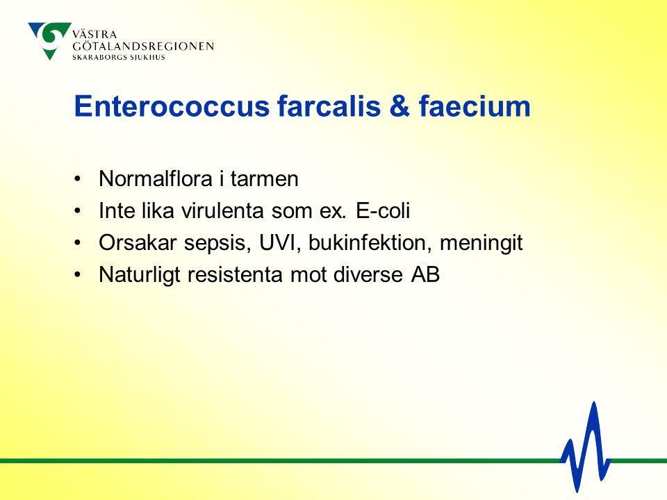 Enterococcus farcalis & faecium Normalflora i tarmen Inte lika virulenta som ex. E-coli Orsakar sepsis, UVI, bukinfektion, meningit Naturligt resisten