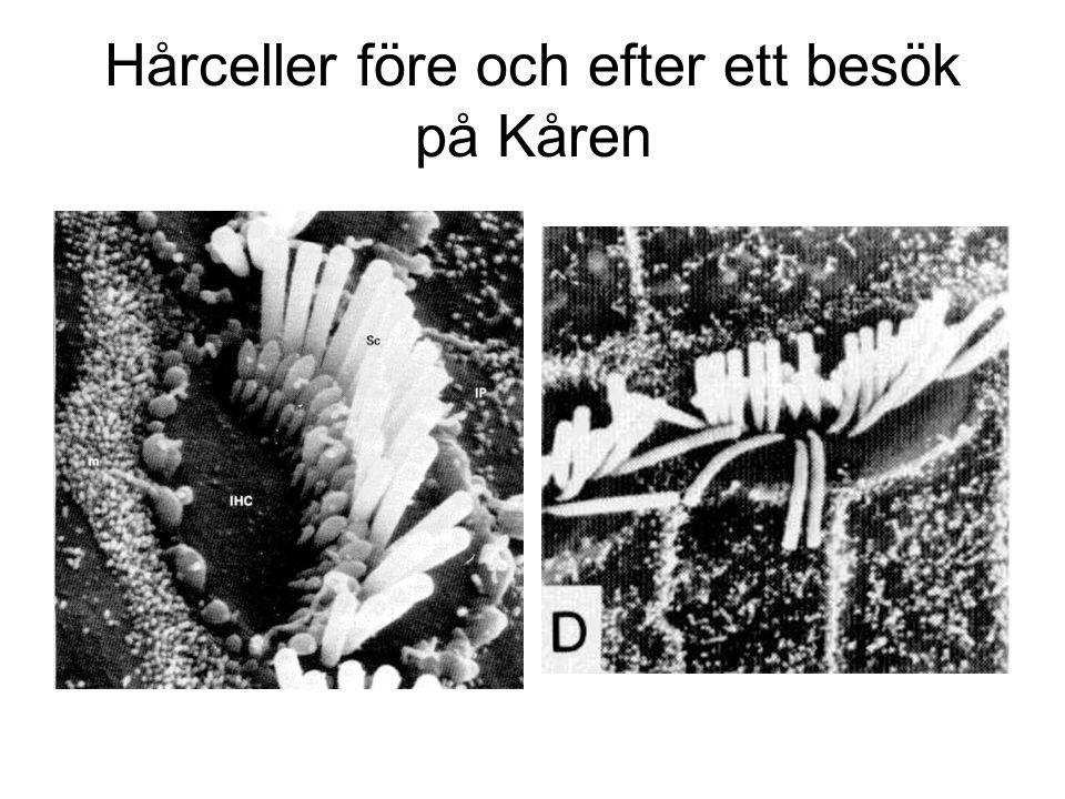 Hårceller före och efter ett besök på Kåren