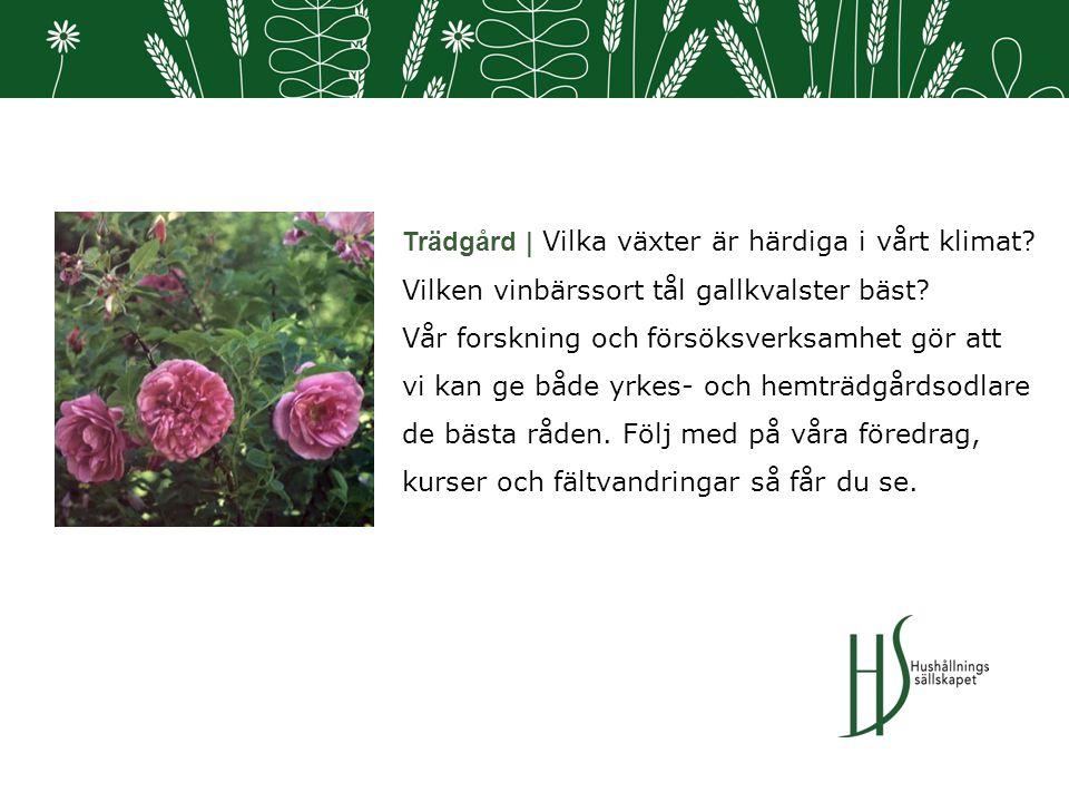Trädgård | Vilka växter är härdiga i vårt klimat. Vilken vinbärssort tål gallkvalster bäst.