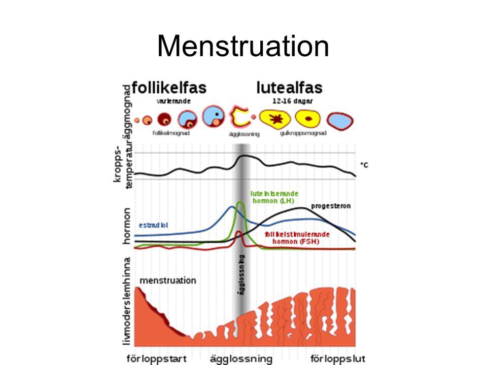 Spiral Hormonspiral fungerar som en vanlig spiral men den förhindrar också att du blir gravid genom att utsöndra gestagen (gulkroppshormon).