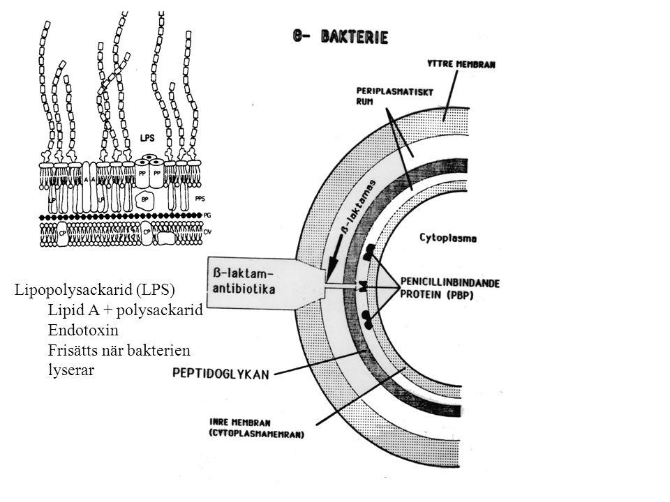 Lipopolysackarid (LPS) Lipid A + polysackarid Endotoxin Frisätts när bakterien lyserar