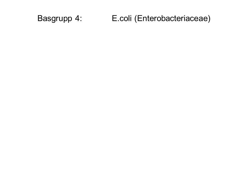 Basgrupp 4:E.coli (Enterobacteriaceae)