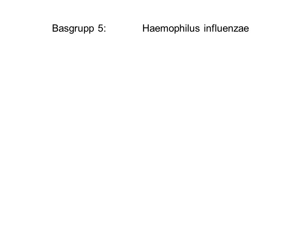 Basgrupp 5:Haemophilus influenzae