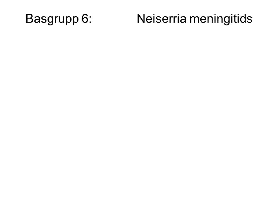 Basgrupp 6:Neiserria meningitids