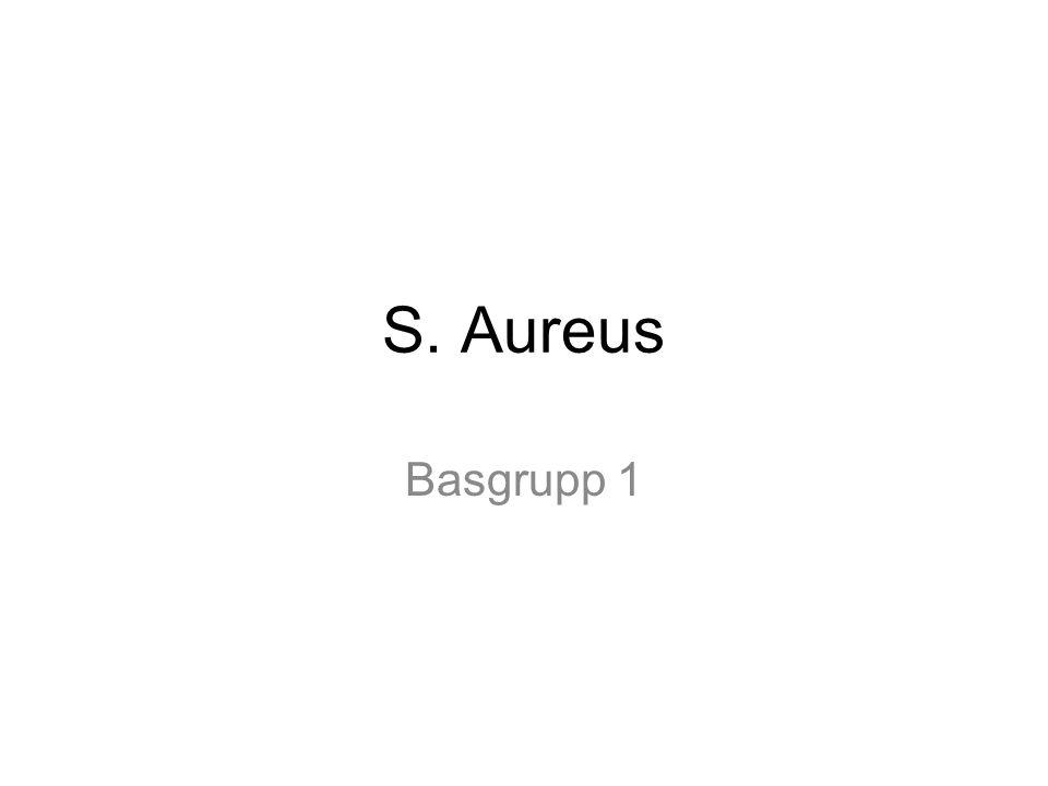Basgrupp 1 s aureus basgrupp 2 streptococcus pyogenes basgrupp 3