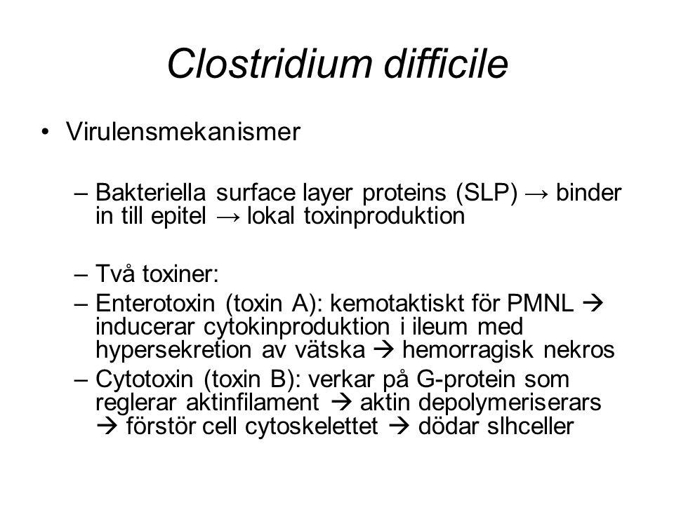 Clostridium difficile Virulensmekanismer –Bakteriella surface layer proteins (SLP) → binder in till epitel → lokal toxinproduktion –Två toxiner: –Ente